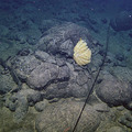 Surveying The Slopes of Axial Seamount