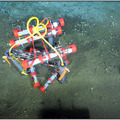 First ROV dive at Southern Hydrate Ridge
