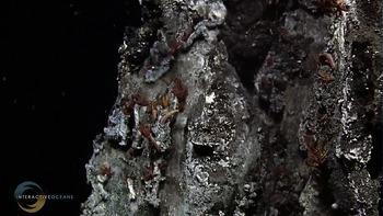 Sulfide Worms On El Guapo